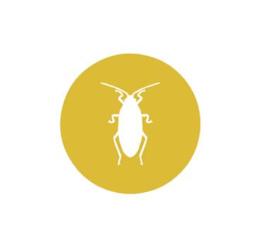 Hamam Böcekleri